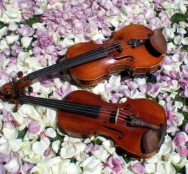 violini2